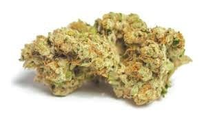 MotorBreath cannabis strain, good for working out.
